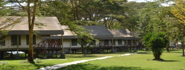 Camping Safaris-Feline